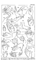 Ethnological Studies Among the North-West Central Queensland Aborigines - Plate IV - Sign language.png