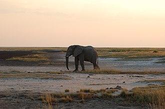 Etosha National Park - Elephant