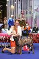 Europea DOG SHOW BRNO 2014.jpg