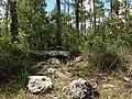 Everglades Caprock - panoramio (2).jpg