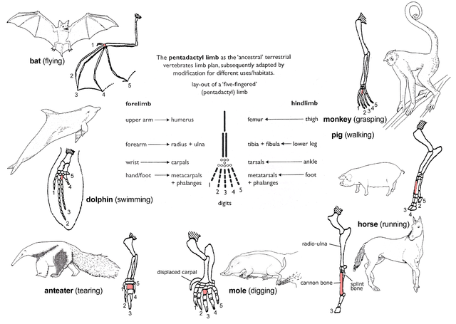 File:Evolution pl.png - Wikimedia Commons