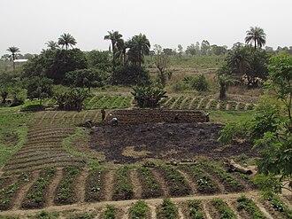 Donga Department - Image: Extensive Landwirtschaft im Norden Benins bei Djougou