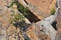 Falco peregrinus nest CT.jpg