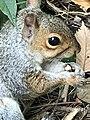 Fall Squirrel.jpg