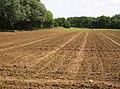 Farmland at Little Budbridge - geograph.org.uk - 485449.jpg