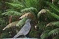 Fauna de Tasmania01.JPG