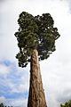 Favourite Trees No. 6.jpg