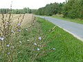 Feldweg bei Beutelsdorf (Kreis Erlangen) - geo.hlipp.de - 13660.jpg