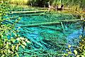 Ferlach Bodental Meerauge 23082011 666.jpg