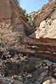 Fern Cave Caprock Canyons.JPG