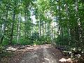 Ferrette-Forêt de hêtres.jpg