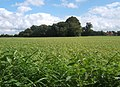 Field between Onehouse and Stowmarket - geograph.org.uk - 957821.jpg