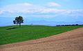 Fields, İmamoğlu 09.JPG