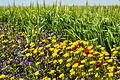 Fleurs (Hesiane).jpg