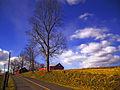 Flickr - Nicholas T - Curb Appeal.jpg