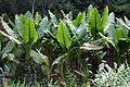 Flora Madagaskar 09.JPG