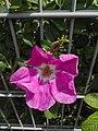 Flower-Dortmund 4.jpg