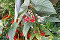 Flower 111 (10099354474).jpg