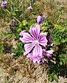 Flower Poznan Winiary..jpg