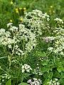 Flower fields in Gertrud-von-le-Fort-Weg Oberstdorf, Germany.jpg