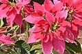 Flower or leaves.jpg