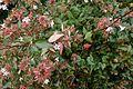 Flowers @ Jardin Pierre-Adrien Dalpayrat @ Paris (30312126644).jpg