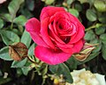 Flowers - Uncategorised Garden plants 121.JPG