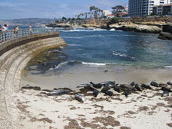 Understand Edit Seals At La Jolla Cove