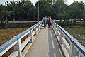 Footbridge - Sundarban Biodiversity and Interpretation Area - Taki - North 24 Parganas 2015-01-13 4655.JPG
