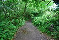 Footpath through the woods, Slapton - geograph.org.uk - 824295.jpg