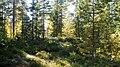 Forest 24.09.2008 - panoramio.jpg