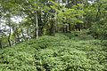 Forest in Doshi 14.jpg