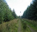 Forest road leading to Fire Observation Tower - geograph.org.uk - 1518288.jpg