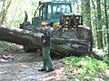 Forestry near Bussang 2.jpg