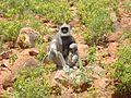 Forset monkey.jpg