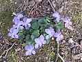 Frühling an der Alb - panoramio (2).jpg