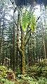 From my trip to British Columbia (22359585425).jpg