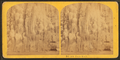 Frost work, from Robert N. Dennis collection of stereoscopic views 3.png