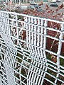 Frosted fence - geograph.org.uk - 1118857.jpg