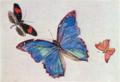 FujishimaTakeji-1900-1906-Notebooks Butterflies-3.png