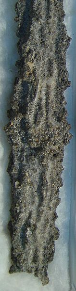 fulgurite, also known as 'petrified lightning' is created when lightning strikes the Earth over sandy, quartz-laden sand, melting it into long root-like structures.