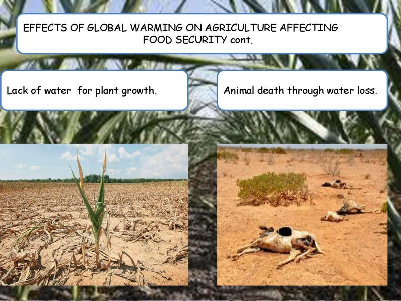global warming and agriculture To meet the global goal of limiting warming to 2°c, annual emissions must be reduced from today's levels of 49 gigatons of co2 to around 23 gigatons by 2050 agriculture would use up 20 of those gigatons, leaving only three for the rest of the global economy.
