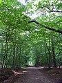 GOC Hoddesdon 061 Hoddesdon Park Wood, Hoddesdon (28797370084).jpg