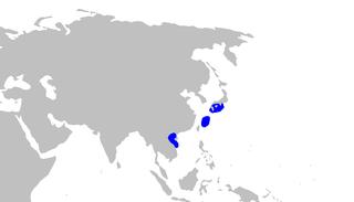 Gecko catshark Species of shark