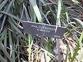Gardenology.org-IMG 2059 hunt0903.jpg
