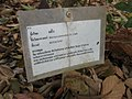 Gardenology.org-IMG 7268 qsbg11mar.jpg
