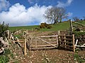 Gates above Ford Farm - geograph.org.uk - 760422.jpg