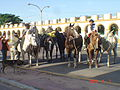 Gauchos with horses.jpg