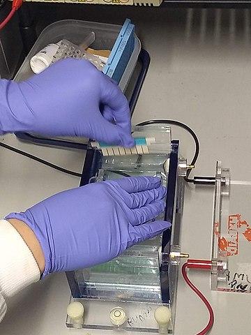 360px Gel electrophoresis insert comb