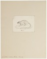 Gerbillus indicus - 1700-1880 - Print - Iconographia Zoologica - Special Collections University of Amsterdam - UBA01 IZ20500179.tif